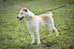 Shelter dog Stock Photography