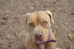 Shelter Dog Stock Photos