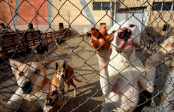 Shelter dogs begging attention. Dogs leaning on fence in a dog shelter begging attention Royalty Free Stock Image