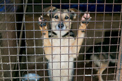 Shelter for homeless dogs Royalty Free Stock Photography