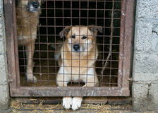 Shelter for homeless dogs Royalty Free Stock Photo
