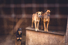 Shelter for homeless dogs Royalty Free Stock Images