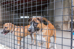 Shelter for homeless dogs, waiting for a new owner Stock Photography