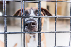 Shelter for homeless dogs, waiting for a new owner Royalty Free Stock Photography