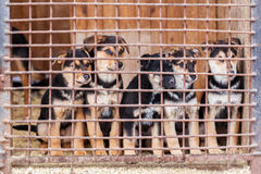 Shelter for homeless dogs, waiting for a new owner Stock Images