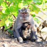 Shelter of monkey baby stock images