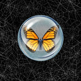 Shelter From risk. And crisis business concept as a person in a protective bubble with butterfly wings flying through a chaos of spider webs overcoming career Royalty Free Stock Photo