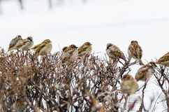 Shelter of small defenceless sparrow birds family Stock Photos