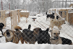 Shelter for stray dogs Stock Images