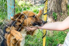 Shelter for stray dogs. Homeless dog in aviary is happy with new. Owner. Volunteers hand with homeless dog outdoors. Concept of volunteering and animal shelters royalty free stock photo