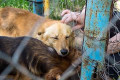 Shelter for stray dogs. Homeless dog in aviary is happy with new. Owner. Volunteers hand with homeless dog outdoors. Concept of volunteering and animal shelters stock photography
