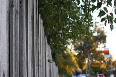 Sheltered Fence Stock Image