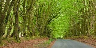 Sheltered Roadway Royalty Free Stock Images