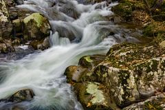 A Sheltered Wild Mountain Trout Stream royalty free stock image