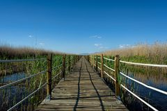A sheltered wooden boardwalk extends through a wildlife sanctuary stock photo