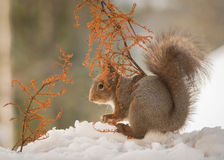 Sheltering snow Stock Image