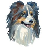 Sheltie akwareli ręka malujący psi portret Obraz Royalty Free