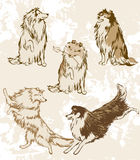 Sheltie and Collie. Breeds of dogs. Vector drawing a lot of isolated elements for your design Stock Image