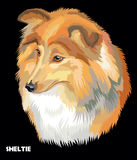 Sheltie colorful vector portrait Royalty Free Stock Photo