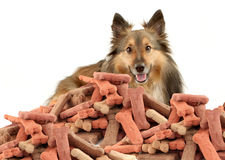 Sheltie and dog biscuits Stock Photo