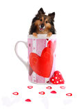 Sheltie inside a Valentine mug Royalty Free Stock Photos