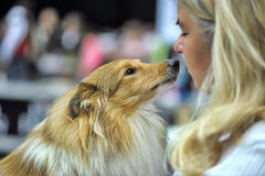 Sheltie with its owner Stock Photo
