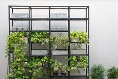 Shelves дерево с белой предпосылкой стены Стоковые Фотографии RF