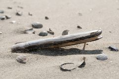 Shelves on the beach. Half burried in the sand Royalty Free Stock Image