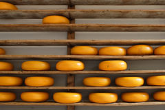 Shelves with cheese Stock Image
