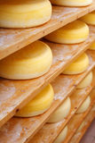Shelves filled with traditional cheese-wheels Royalty Free Stock Images