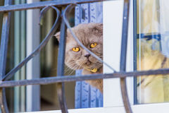 Shelves full of various bread. Man takes them. Closeup of a cat sitting behind iron fence waiting Royalty Free Stock Images