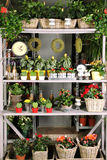 Shelves with goods. Close-up store shelves with a different product. Houseplants, flowers, vsechi, watch, decorative objects and interior Royalty Free Stock Image