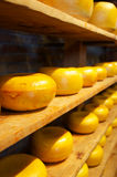 Shelves of Gouda Cheese Royalty Free Stock Photography