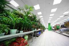 Shelves on side with variety of pottery plants Stock Images