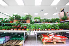 Shelves with variety of small pottery plants Royalty Free Stock Photos