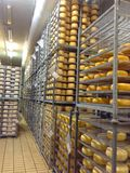 Shelving with cheese. At a factory in Sardinia Royalty Free Stock Image