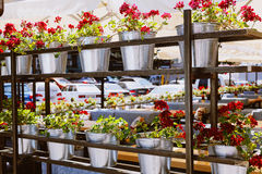 Shelving with flowers in iron bucket Royalty Free Stock Photo