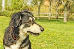 Shemale doggie met een bloem in haar mond stock fotografie