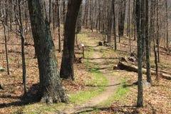 Shenandoah N P - Virginia Arkivbild
