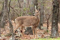 Shenandoah N P - Virginia Royaltyfri Fotografi