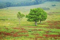 Shenandoah national park. Two trees in shenandoah national park Royalty Free Stock Photos