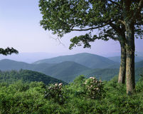 Shenandoah National Park Royalty Free Stock Photos