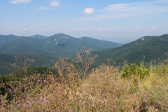 Shenandoah nationalpark Royaltyfria Foton