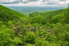 Shenandoah Valley, горы голубого Ридж и кустарник рододендрона Catawba стоковая фотография