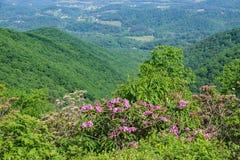 Shenandoah Valley, лавр горы и рододендрон Catawba стоковое фото