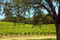 Shenandoah Valley Vineyards Stock Photo