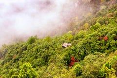 Shenxianju drzewa z mgła widokiem zdjęcie stock