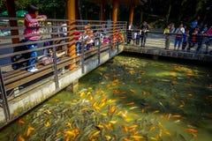 SHENZEN, CHINA - 29. JANUAR 2017: Innerer Lian Hua Shan-Park, großes Erholungsgebiet, viele von Orange und Dunkelheit gefärbt Stockbilder