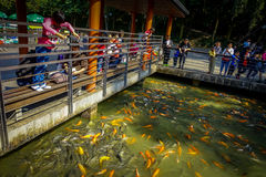 SHENZEN, CHINA - 29 JANUARI, 2017: Binnenlian hua shan-park, groot recreatief gebied, veel gekleurde sinaasappel en dark stock foto's