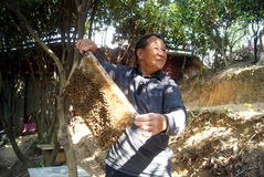 Shenzhen, Κίνα: beekeepers Στοκ φωτογραφίες με δικαίωμα ελεύθερης χρήσης